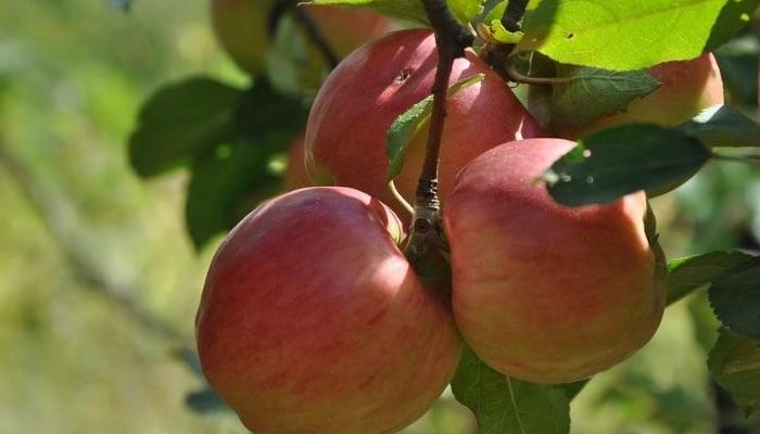 unterm-apfelbaum